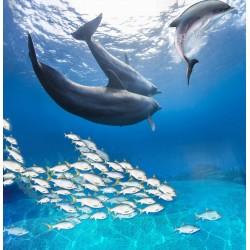 Revêtement de sol paysage fond marin trompe l'oeil 3D - Les dauphins avec les poissons
