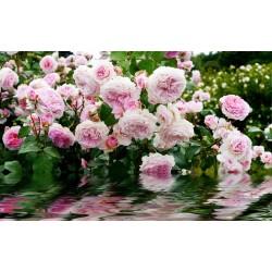 Décoration murale romantique tapisserie florale - Les roses au bord de l'eau