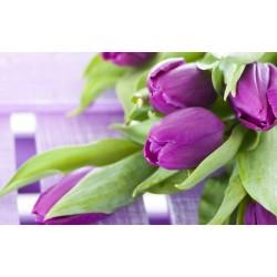 Papier peint photo florale macrophotographie - Les tulipes violettes