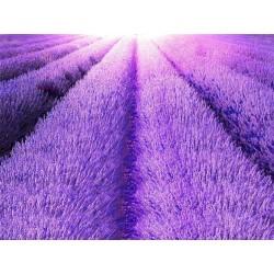 Revêtement de sol paysage provençal - Le champ de lavande mauve