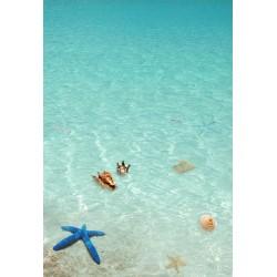 Revêtement de sol 3D salle de bain paysage océan - L'étoile de mer bleu et les coquillages