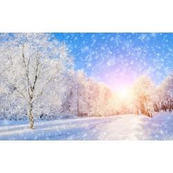 Paysage d'hiver - Allée enneigée sous le soleil du petit matin