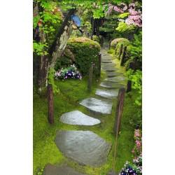 Paysage zen - Jardin japonais sous la pluie
