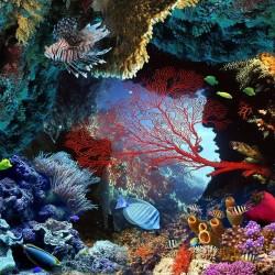 Echantillon revêtement de sol vinyle auto-adhésif 0.3mm épaisseur - Paysage fond marin les poissons et les coraux dans le rocher