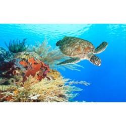 Echantillon revêtement de sol vinyle auto-adhésif 0.3mm épaisseur - La tortue de la mer