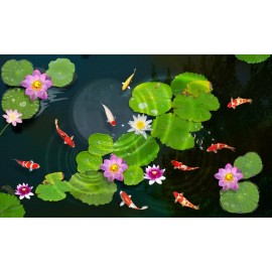 Echantillon revêtement de sol vinyle auto-adhésif 0.3mm épaisseur - Les nénuphars dans l'étang avec les poissons