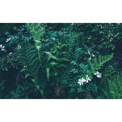 Mur végétal - Les plantes et les branches de fougère