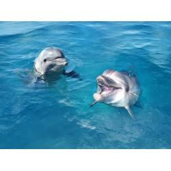 Revêtement de sol trompe l'œil 3D salle de bain - Les 2 dauphins dans l'eau