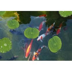 Revêtement de sol trompe l'œil 3D salle de bain ambiance zen - Les carpes et les feuilles de nénuphar