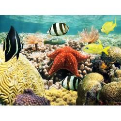 Revêtement de sol salle de bain trompe l'œil 3D - Etoile de mer géante sur les coraux