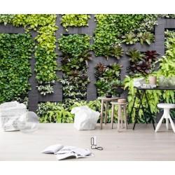 Mur végétal - Les plantes grimpantes avec séparation en bois foncé