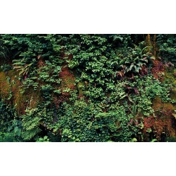 Mur végétal - Les plantes grimpantes et la mousse