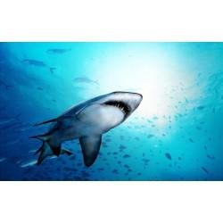 Décoration plafond paysage fond marin - Le requin et les poissons