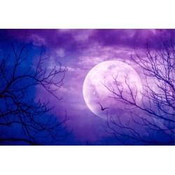 Décor plafond paysage fantaisie - La forêt à la pleine lune