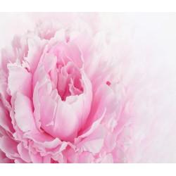 Papier peint photo romantique - La pivoine rose