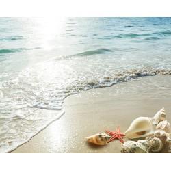 Revêtement de sol plage - Les coquillages au coucher du soleil