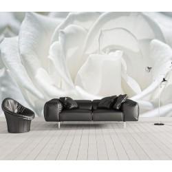 Papier peint photo macro photographie - Une rose blanche