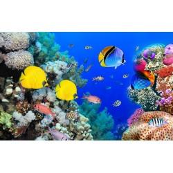Panneaux muraux parois de douche paysage fond marin - Poissons tropicaux dans la barrière de corail