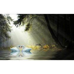 Papier peint  romantique-Les cygnes à l'aube