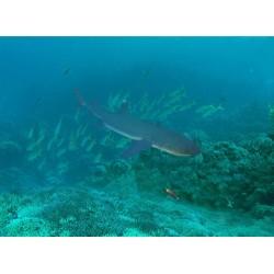 Revêtement sol fond marin - Le requin
