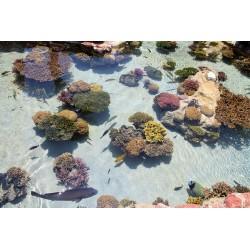 Revêtement sol mer tropicale - les poissons avec les coraux