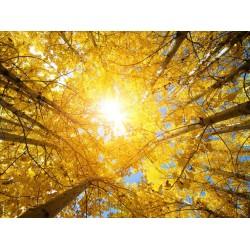 Plafond  tendu paysage - Le soleil d'automne
