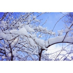 Décor plafond paysage - La neige