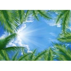 Décor plafond personnalisé - Ciel bleu avec les palmiers