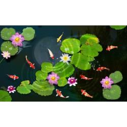 Revêtement sol Zen - Les nénuphars et les poissons dans l'étang