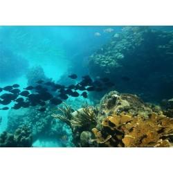 Revêtement de sol paysage fond marin - Les poissons dans le rocher