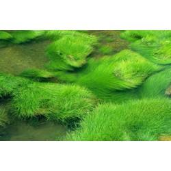 Revêtement de sol herbe