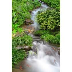 Revêtement de sol paysage - Petite cascade dans la forêt