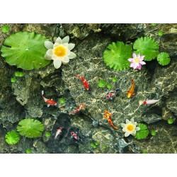 La fraîcheur - Les carpes et les nénuphars dans l'eau claire