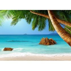 Paysage au bord de la mer avec les cocotiers