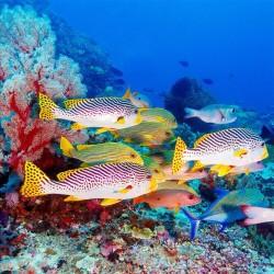 Revêtement de sol paysage fond marin - Les poissons tropicaux