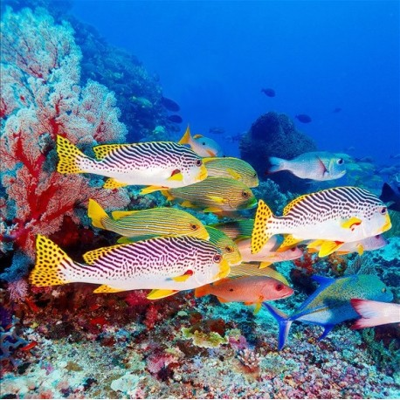 Rev tement de sol vinyle auto adh sif pvc personnalis paysage fond marin les poissons tropicaux - Revetement de sol adhesif ...