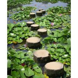 Revêtement de sol paysage zen - Pas japonais dans l'étang avec les nénuphars et les poissons