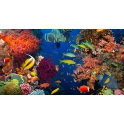 Revêtement de sol fond marin trompe l'œil effet 3D - Les poissons dans le massif coralien