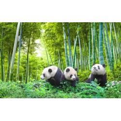 La famille panda dans la forêt de bambou