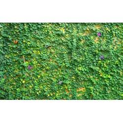 Décoration murale - Mur végétal
