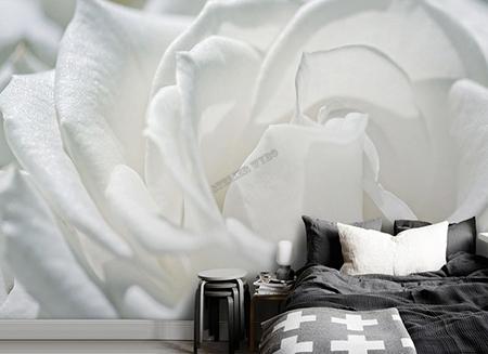 papier peint,papier peint photo,rose,papier peint rose blanche,tapisserie séjour rose blanche,poster salon rose blanche,sticker salle de bain fleur,tête de lit rose,papier peint panoramique,papier peint intissé